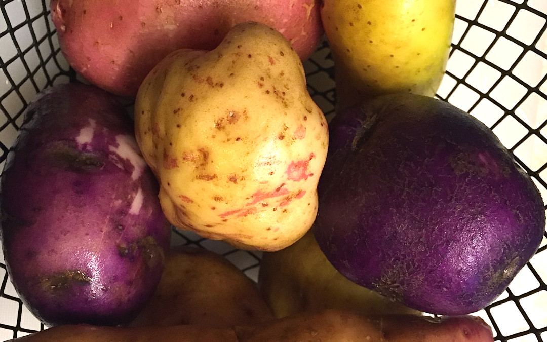 Check out these potatoes!